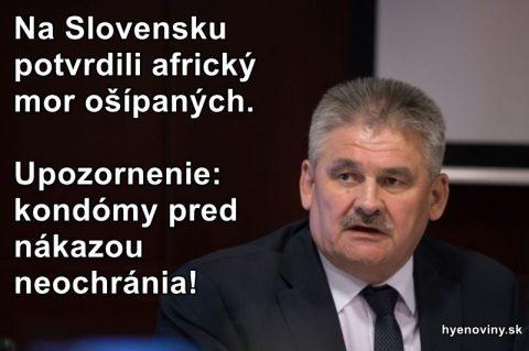 Na Slovensku potvrdili africký mor ošípaných. Upozornenie: kondómy pred nákazou neochránia!