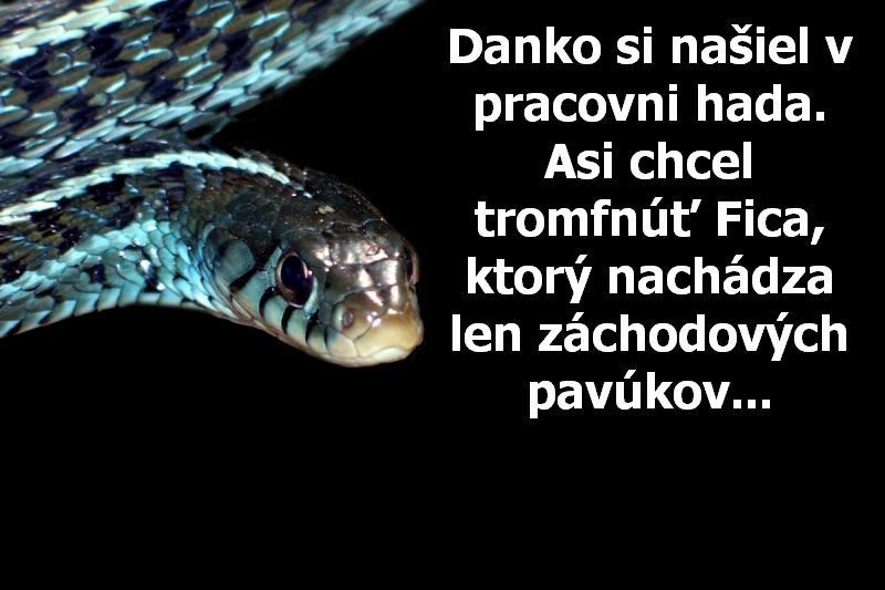Danko si našiel v pracovni hada. Asi chcel tromfnúť Fica, ktorý nachádza len záchodových pavúkov...