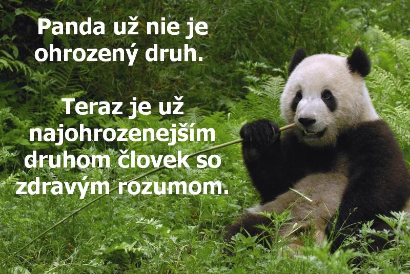 Panda už nie je ohrozený druh. Teraz je už najohrozenejším druhom človek so zdravým rozumom.